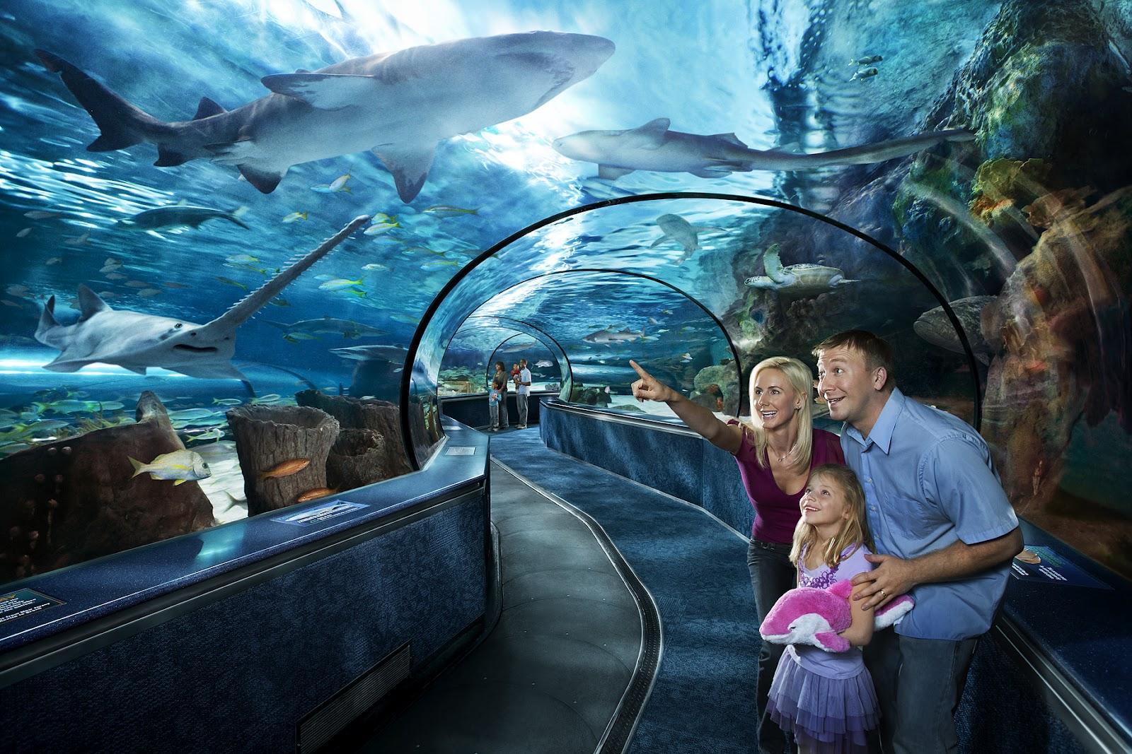 North Myrtle Beach Aquarium